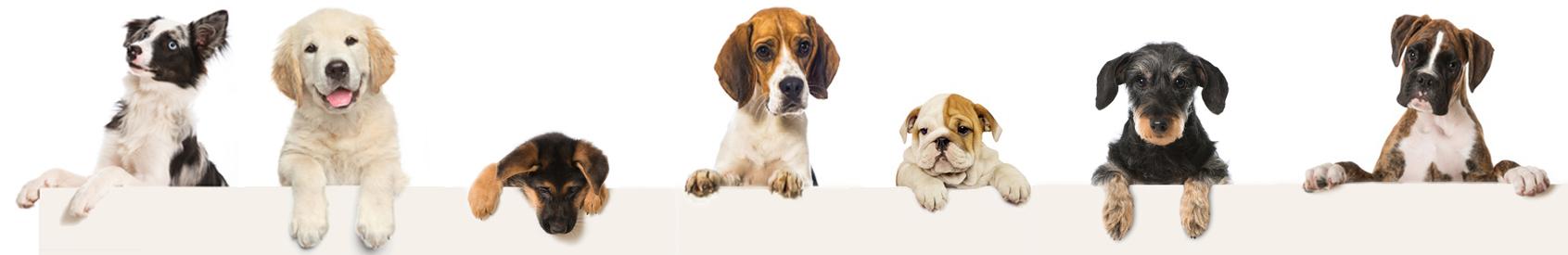 Physiotherapiepraxis für Hunde in Ettlingen und Region Karlsruhe