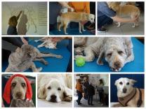 Praxis für Hunde Physiotherapie