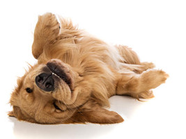Effektives Hundetraining mit dem Unterwasserlaufband